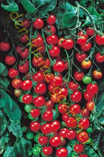 tomaten tomatensamen saatgut s mereien bestellen kaufen. Black Bedroom Furniture Sets. Home Design Ideas