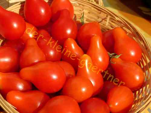 Tomate Red Pear Kirschtomate 10 Samen
