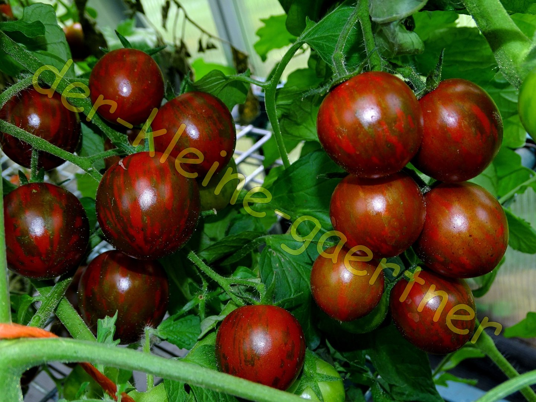 tomate black cherry zebra kirschtomate 10 samen s mereien. Black Bedroom Furniture Sets. Home Design Ideas