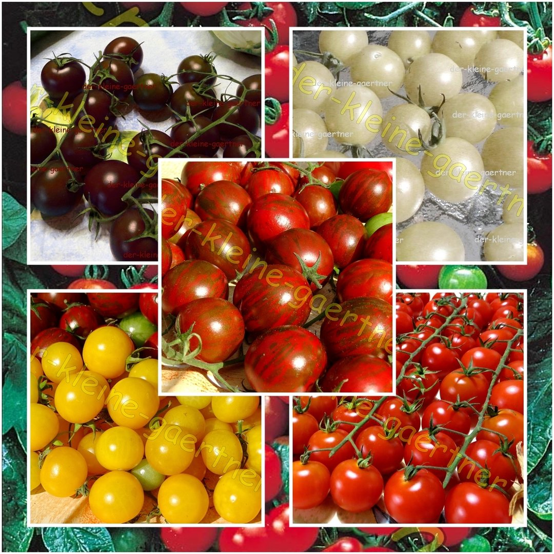 tomaten mini mix 7 sorten 20 samen tomatensamen kaufen. Black Bedroom Furniture Sets. Home Design Ideas