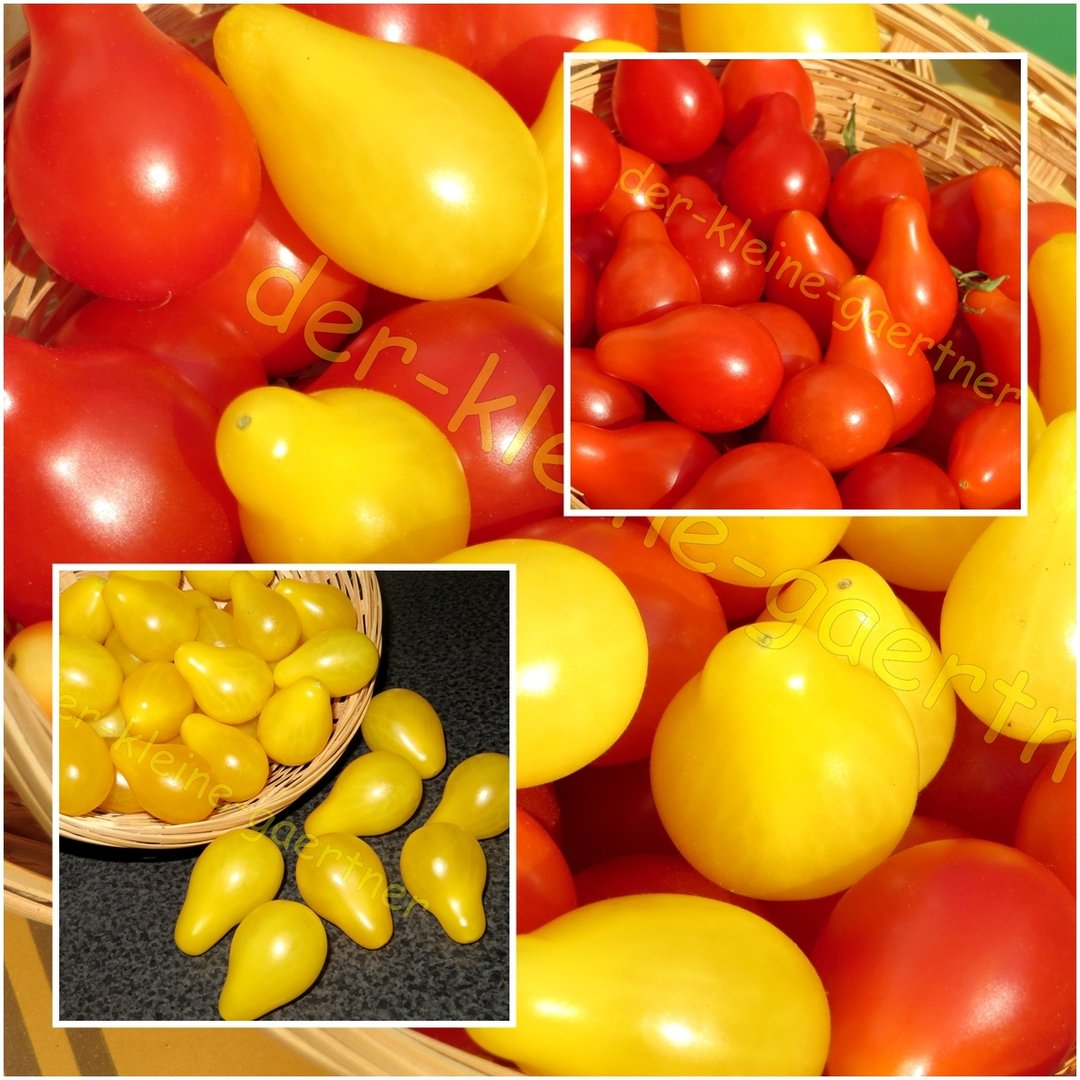tomaten mini mix 7 sorten 20 samen tomatensamen kaufen auss en. Black Bedroom Furniture Sets. Home Design Ideas