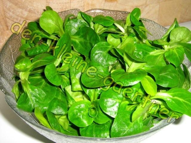 feldsalat rapunzel n sschen wintersalat salat 1000 samen kaufen. Black Bedroom Furniture Sets. Home Design Ideas