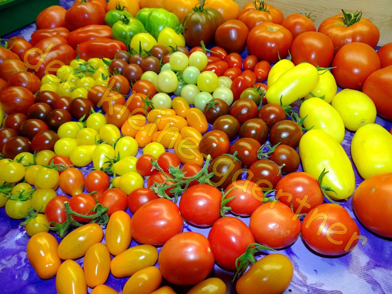 bunter tomaten mix tolle farben formen 20 sorten 40. Black Bedroom Furniture Sets. Home Design Ideas