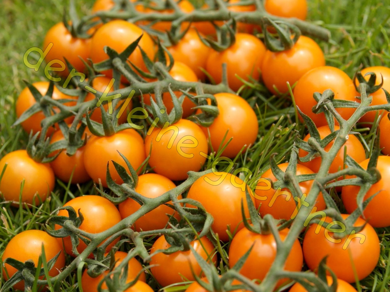 10 Samen Tomaten Am Fensterbank Cherry-Tomatee