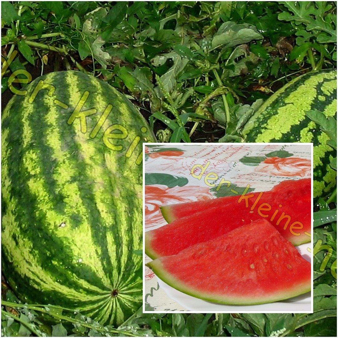 Wassermelone Pflanzen Kaufen : riesen wassermelone bis zu 14 kg s saftig 10 samen kaufen ~ Watch28wear.com Haus und Dekorationen