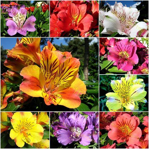 Beliebt Bevorzugt Mehrjährige Sommerblumen und Stauden - der-kleine-gaertner.com @GZ_76